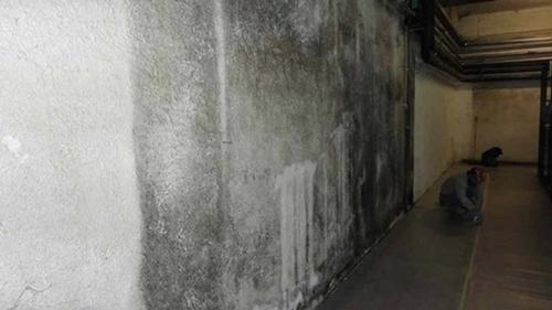 Particolare di muratura ove si denota la presenza di muffe su tutta la superficie.