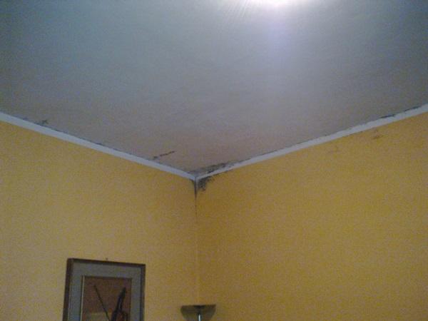 Rimozione della muffa in appartamenti in Pinerolo